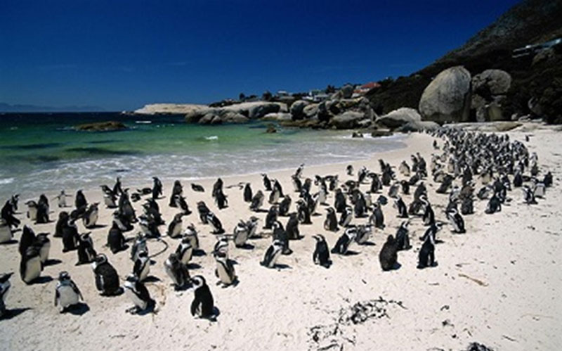 mobile home parks in san go with Boulders Beach Penguin Colony on Best Cute Love Quotes together with Night Stalker Serial Killer Richard Ramirez Dies also 35tl31 together with Boulders Beach Penguin Colony furthermore 5374833 MLS W4274408 Na 49 Aspen Hills Rd.
